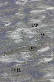 shapes in the sand - paw prints