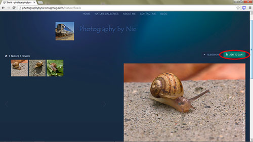 snail-gallery-cart_hp-LR500