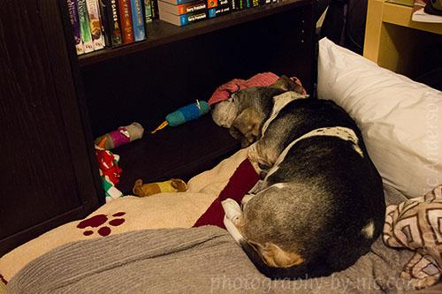 pup head prop inside bookshelf