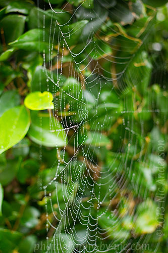 spider web with waterdrops