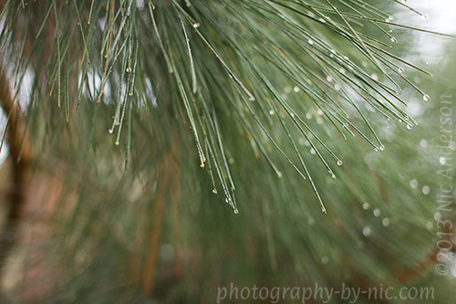 water drops in trees