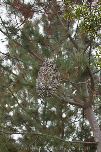 spider web with waterdrops - up high