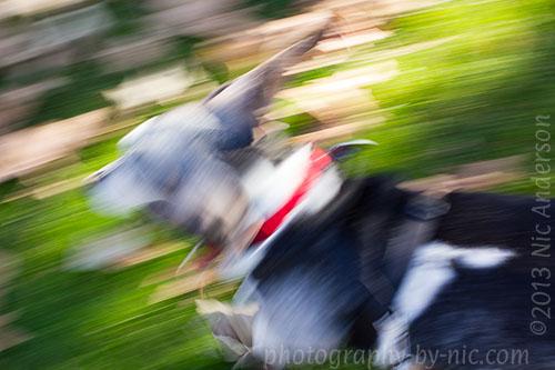 basset hound - blur