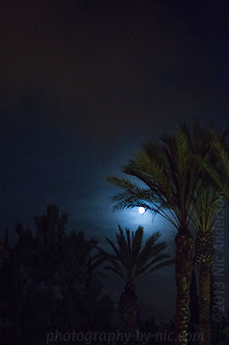full moon - palm trees