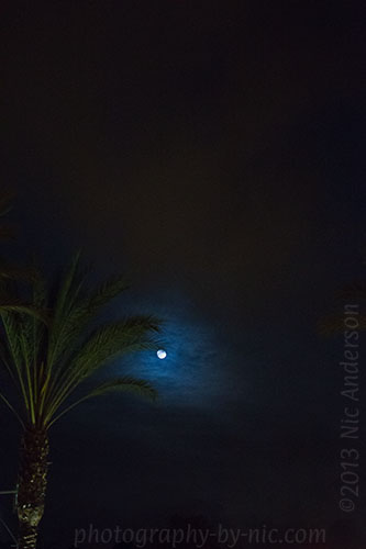 full moon - palm tree