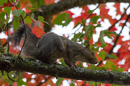 squirrel - in tree