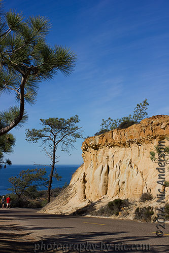 torrey pines state reserve - car path