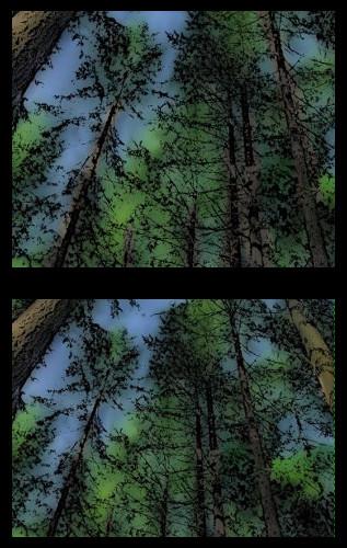 tree-trunks-diptych