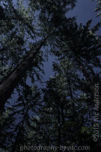 Moonlight - Wk4