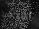 Early_morning_cobwebs-share-alike_lowres