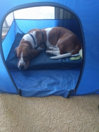 Penny hanging out in the tent