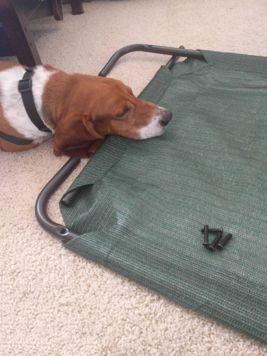 June 14 - Duke helping me build the Coolaroo