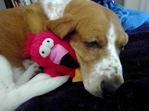 Penny and her Dodo