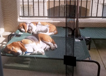Solar powered pups