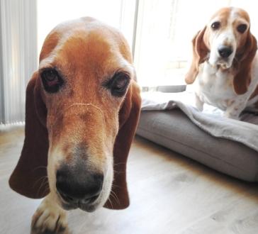 Duke (Penny in background)