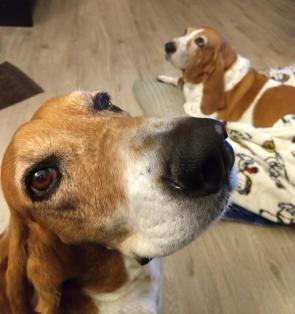 Duke (Penny in bkgd)
