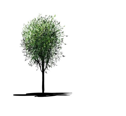 ivy-tree_LR1000
